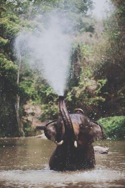 Elephant spraying water - photo#19