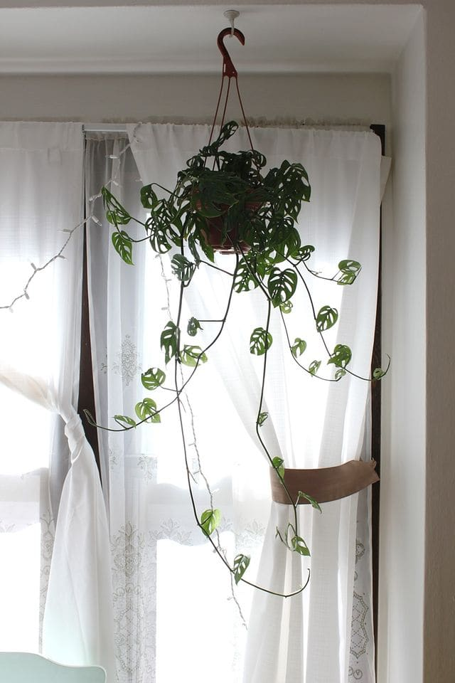 Best Plants To Put In Your Room