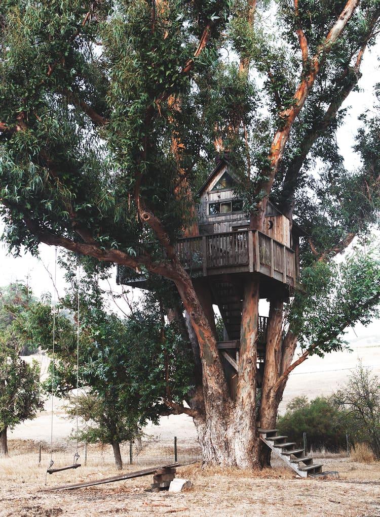 treehouse in petaluma