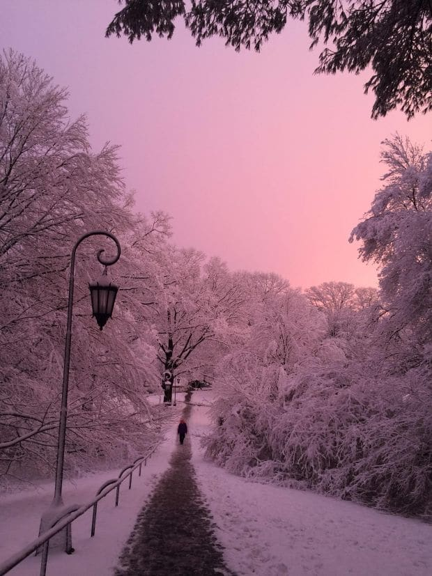 pink in winter